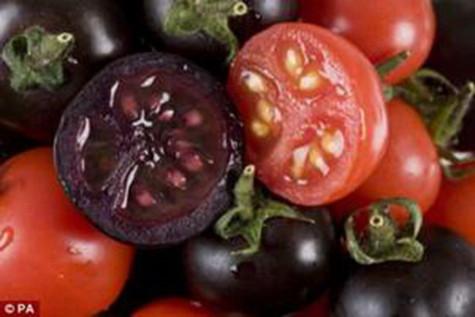 Cà chua tím có thể chống ung thư