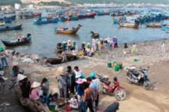 Chuyện nghề cá tại Huyện đảo Lý Sơn