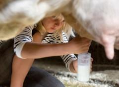 Con bò 'cho sữa người'