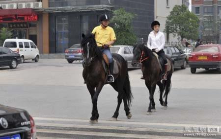 Đại gia cưỡi ngựa tới công sở