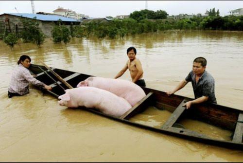 Giá gạo, thịt lợn, rau, gia vị...Trung Quốc tăng vọt sau lũ