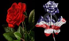 """Khám phá """"quốc hoa"""" của các nước trên thế giới"""
