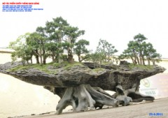 Kỷ lục Việt Nam: Bộ cây cảnh Chiến thắng Bạch Đằng
