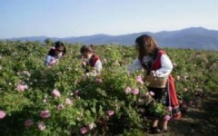 Lễ hội hoa hồng tại Bulgaria