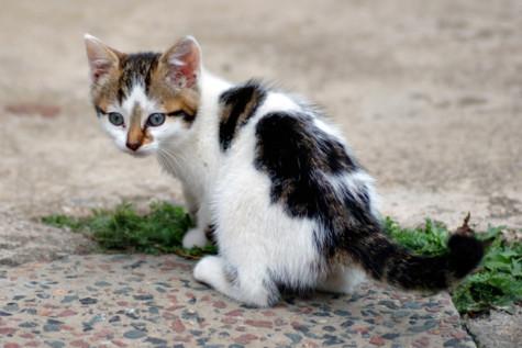Mèo 'tội phạm' mang ĐTDĐ cho tù nhân