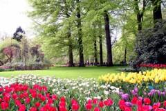 Muôn hoa rực rỡ tại Hà Lan