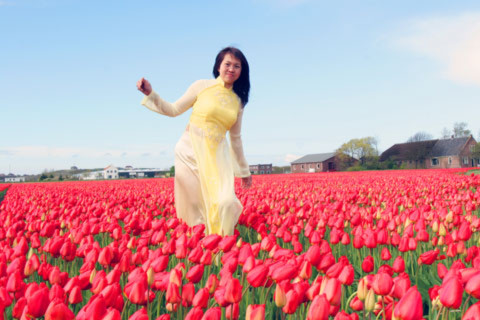 Cô gái Việt giữa rừng hoa tulip.