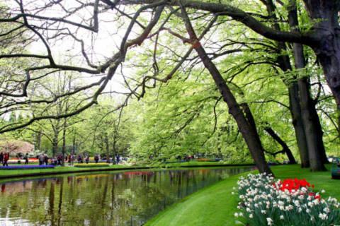 Một góc công viên hoa Keukenhof.