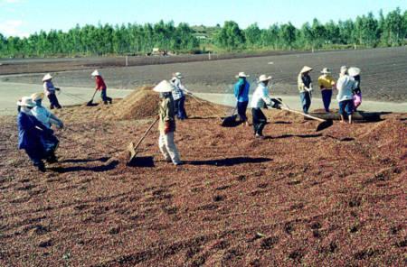 Trung Quốc ồ ạt gom nông sản Việt: Coi chừng nông dân bị lừa