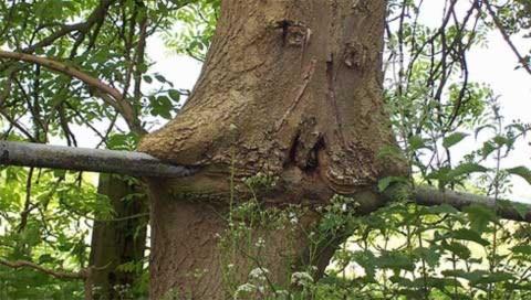 Xem cây đói nghiến ngấu đồ vật