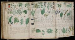 Bản viết tay Voynich