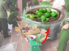 Cơ quan chức năng tiến hành mở niêm phong lô hàng, phát hiện phần hạt táo được làm bằng nhựa cứng có hai màu xanh đậm và vàng