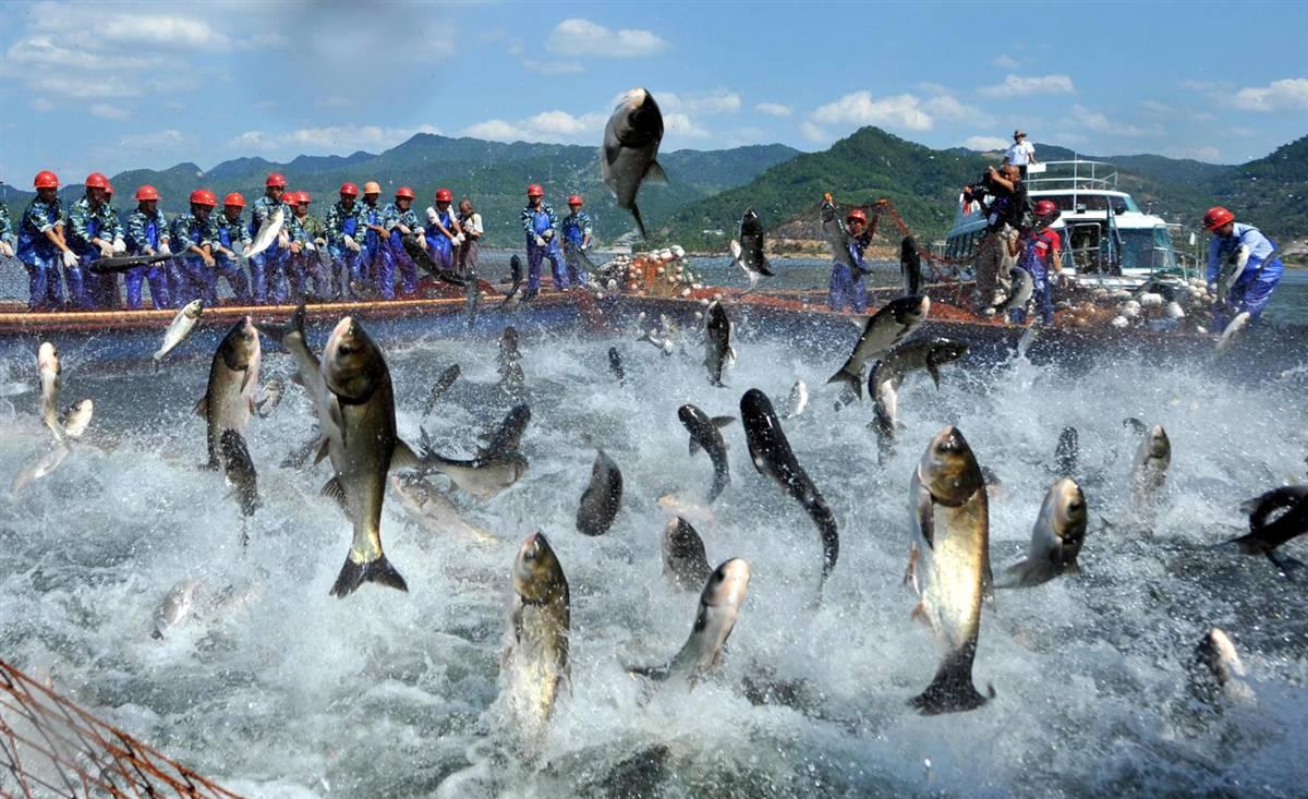 Ngư dân Nghệ an