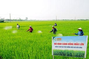 Mô hình cánh đồng mẫu lớn ở Nam Định Photo courtesy of namdinh.gov