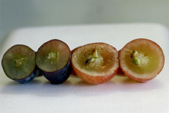 Khi bổ ra, nho Mỹ nhìn rất chắc thịt và không có hạt (trái) trong khi nho đỏ Trung Quốc có nhiều hạt và ruột khá rỗng, bóp vào thấy rất nhão (phải).