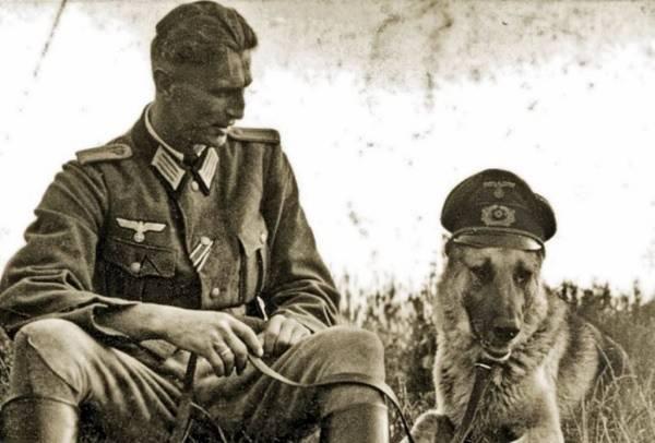 Điều ít được biết về đội quân chó biết nói của Hitler 1