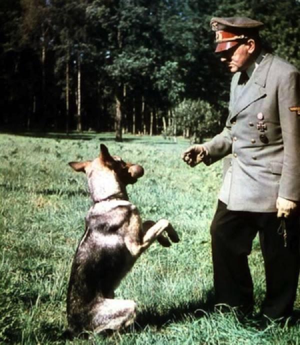 Điều ít được biết về đội quân chó biết nói của Hitler 2
