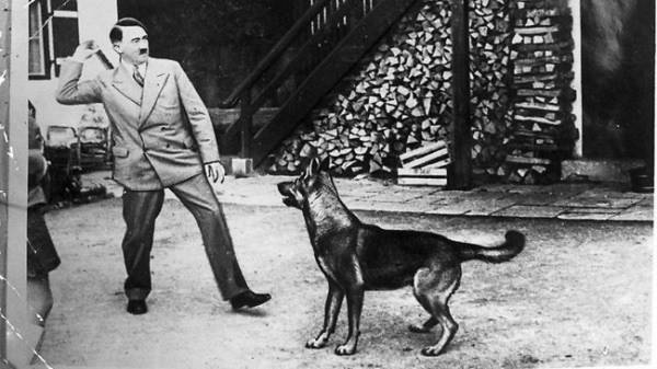 Điều ít được biết về đội quân chó biết nói của Hitler 4