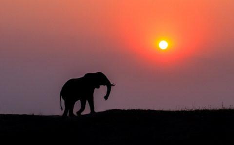 Con voi này dường như bị lạc khỏi đàn.