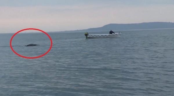 Sinh vật lạ xuất hiện ở Ailen rất giống quái vật hồ Loch Ness 2