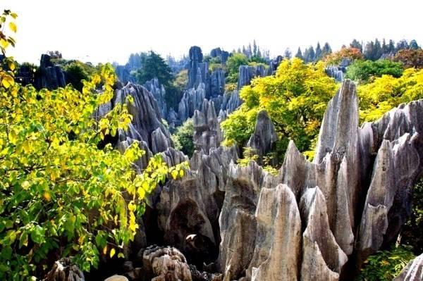 Thăm khu rừng đá khổng lồ được mệnh danh kỳ quan 7