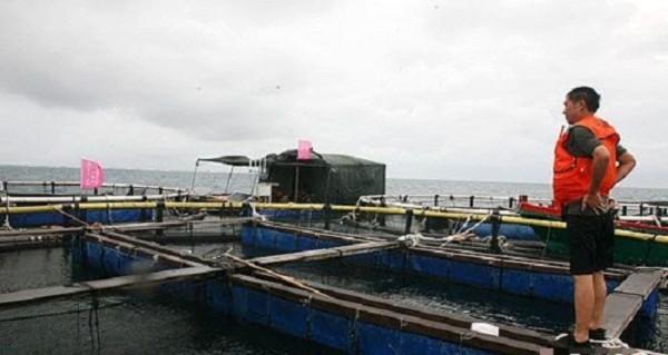 Trung Quốc đã xây dựng trái phép hệ thống hồ nuôi cá lồng...