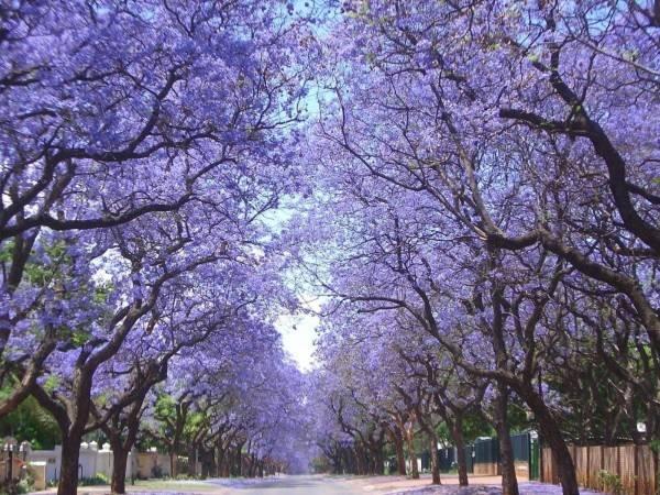 Những con đường tình yêu đẹp ngỡ ngàng trên thế giới 12