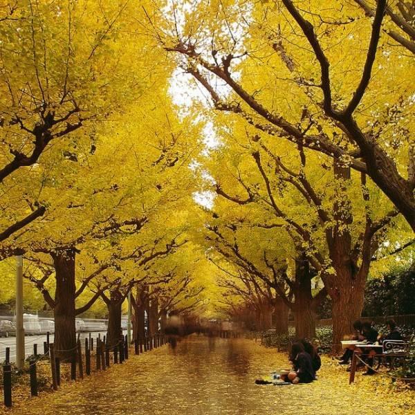 Những con đường tình yêu đẹp ngỡ ngàng trên thế giới 19