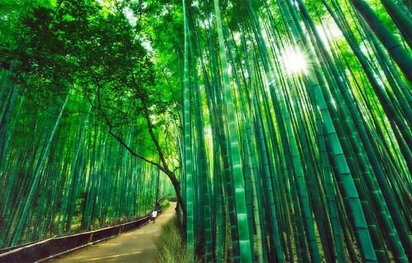 Những con đường tình yêu đẹp ngỡ ngàng trên thế giới 25