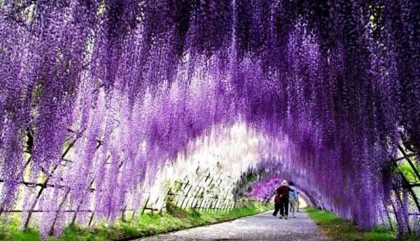 Những con đường tình yêu đẹp ngỡ ngàng trên thế giới 5
