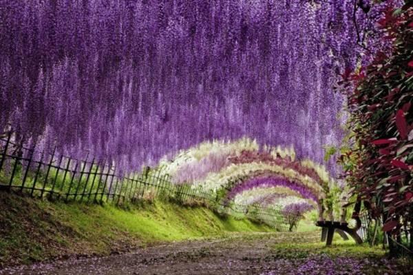 Những con đường tình yêu đẹp ngỡ ngàng trên thế giới 6