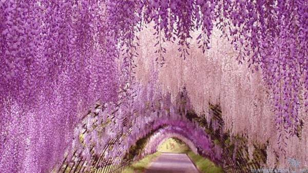 Những con đường tình yêu đẹp ngỡ ngàng trên thế giới 7