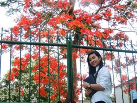 Thiếu nữ... trường xưa... cổng trường và tán Phượng