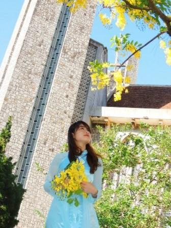 Hoa hoàng yến nở thành chùm, vàng rực rủ mình trong ánh nắng