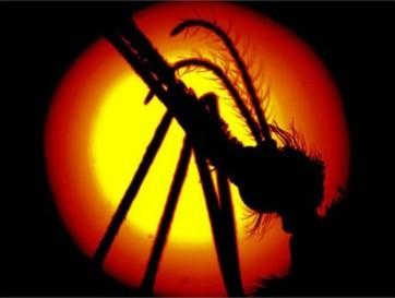 Muỗi là một nhóm sinh vật thuộc lớp côn trùng hợp thành họ Culicidae, bộ hai cánh (Diptera). Chúng có một đôi cánh vảy, một đôi cánh cứng, thân mỏng, các chân dài. Muỗi đực hút nhựa cây và hoa quả để sống, muỗi cái hút thêm máu người và động vật.