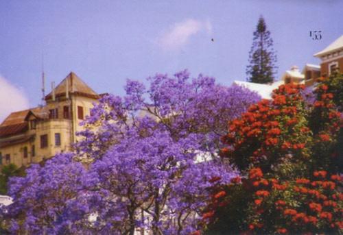 Đến Nam Phi ngắm mùa phượng tím - 3