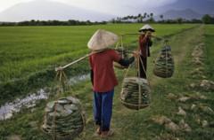 Hai nông dân trò chuyện bên ruộng lúa. AFP photo