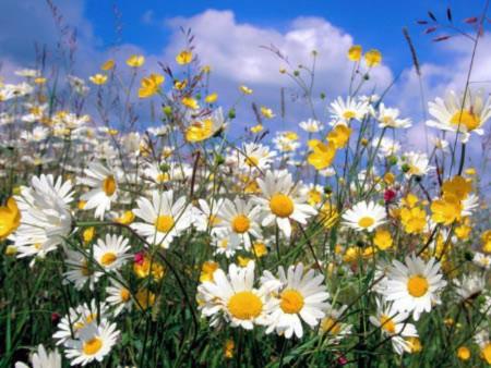 Đẹp hút hồn những cánh đồng hoa - 1