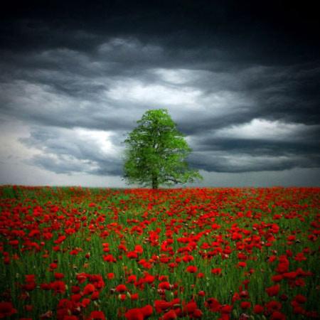 Đẹp hút hồn những cánh đồng hoa - 7