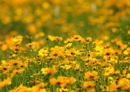 Đẹp hút hồn những cánh đồng hoa - 10