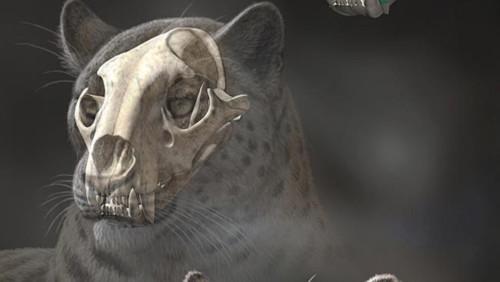 skull-8550-1384329941.jpg