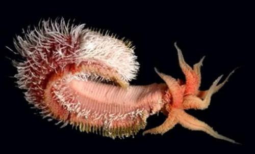 Những bí mật kỳ thú trong lòng đại dương