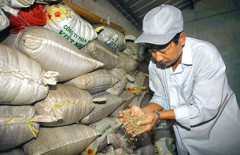 Một chủ trại cà phê ở Long Khánh đang kiểm tra lại loai cà phê Robusta đã được sấy khô và đóng bao. AFP