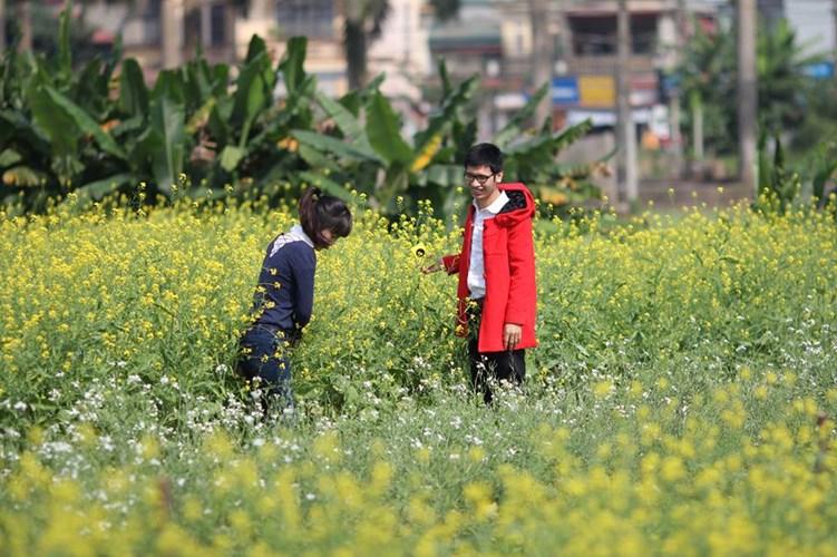 Những chủ đất cũng thường yêu cầu mức phí từ 10 - 20 nghìn đồng cho một người vào vui chơi, chụp ảnh trong vườn cải.