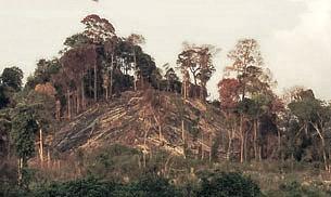 Nạn phá rừng ở Tây Nguyên
