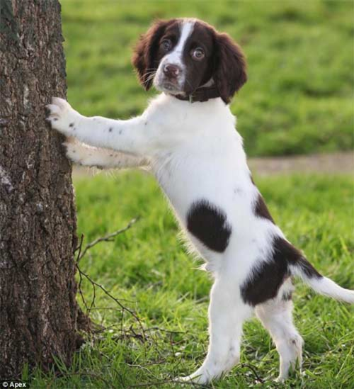 Chú chó có đốm lông hình trái tim - 2