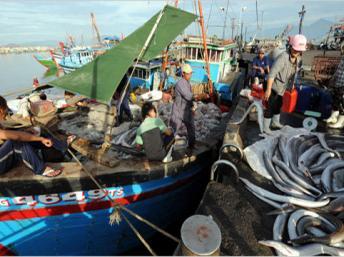 """Ngư dân Đà Nẵng chuyển cá lên bờ. Ảnh tư liệu. Việt Nam là nước bị """"vùng cấm tàu cá ngoại quốc"""" - do Trung Quốc áp đặt từ đầu năm 2014 - tác hại nặng nề nhất Reuters"""
