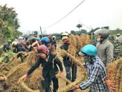 Dân Văn Giang bện rơm làm khiên chắn chống đạn hoa cải của bọn xã hội đen