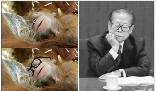 Người sử dụng internet bình luận ám chỉ trong ảnh con khỉ quá giống Giang Trạch Dân.