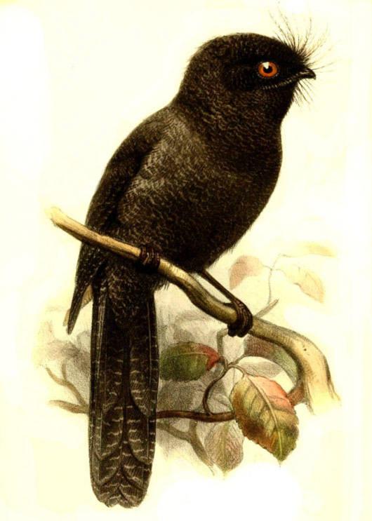 Năm loài chim có nguy cơ tuyệt chủng nhất thế giới